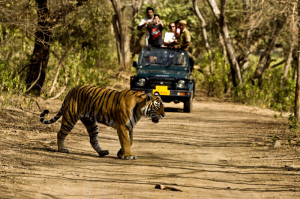 Jeep-Safari-Jim-Corbett-National-Park