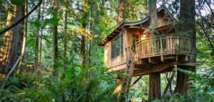 """<img src=""""The-Tree-House-Resort.jpg"""" alt=""""tree house resort most expensive in india"""">"""