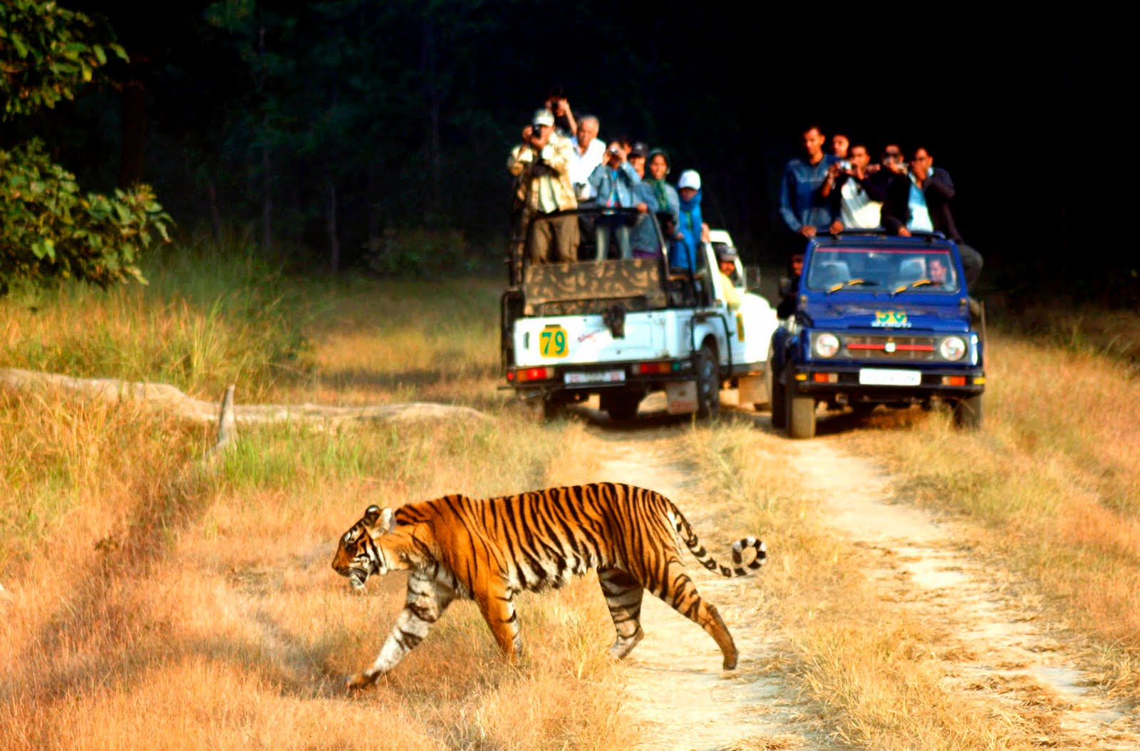 10 Most Popular Wildlife Sanctuaries In India, Forests of India
