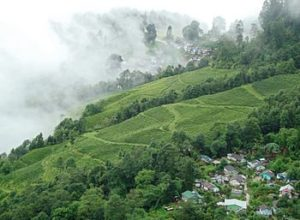 Beautiful Tea Gardens, Darjeeling