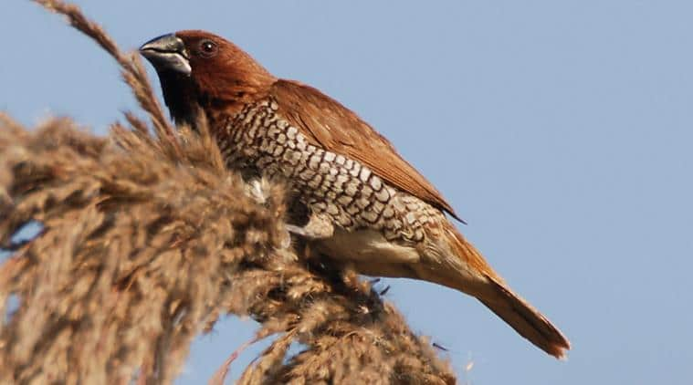 12 Popular And Amazing Birds Breed in India