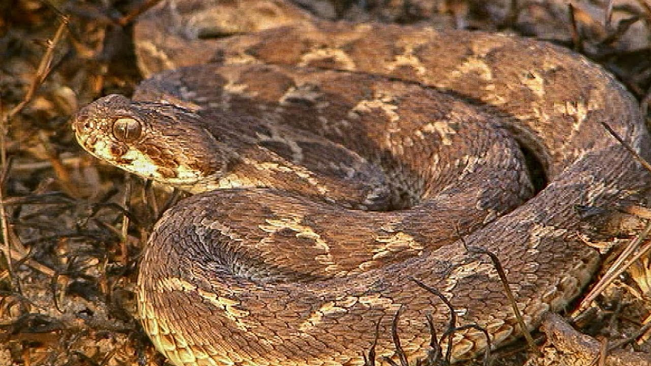 11 Famous Snake Breeds Found In India – Best of India!