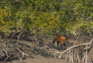 Swampy lands of Sundarbans National Park