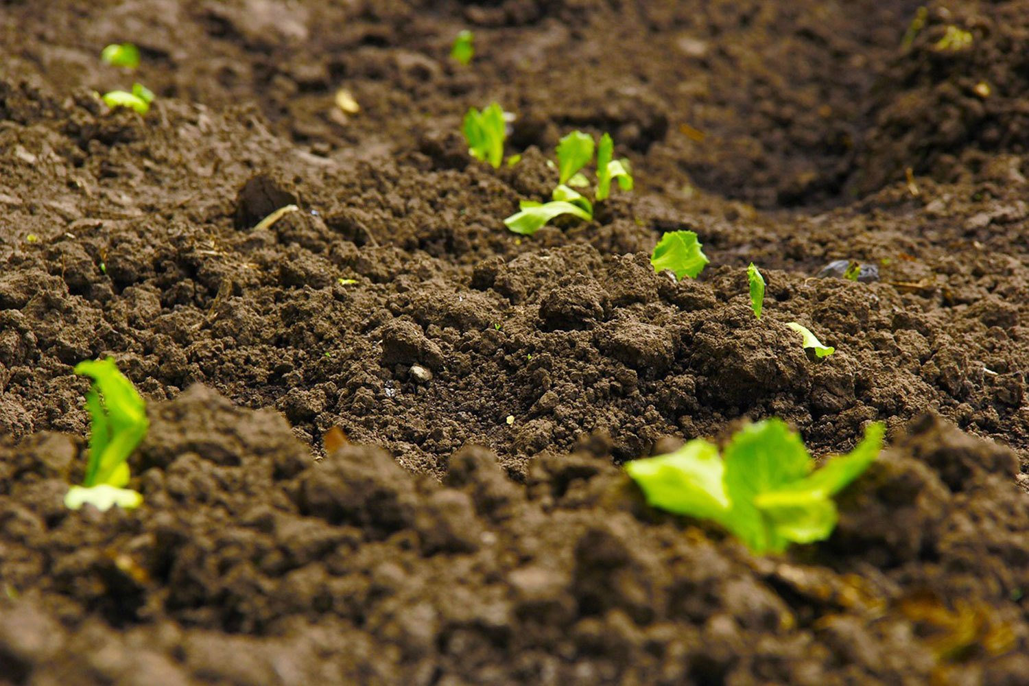 8 Different Types of Soil Found in India – Best of India!