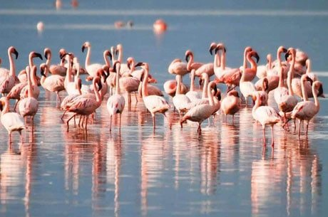 Top 10 Popular Bird Sanctuary In India.