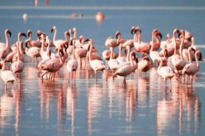 Chilika lake bird sanctuary- Lake