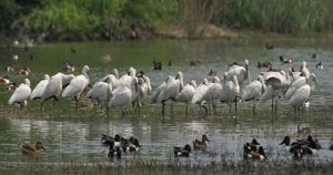 Sultanpur Bird Sanctuary, Haryana