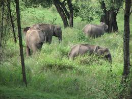 elephants at the biosphere reserve