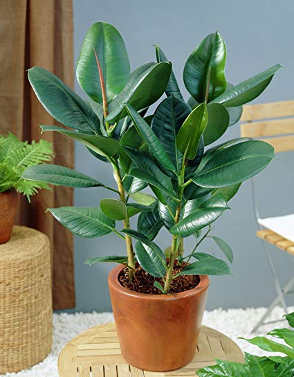 Indian Plants that Brings Good Luck and Money – Best of India!