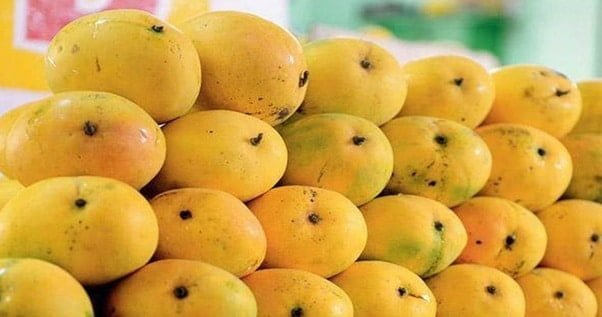 Safeda-Mangoes