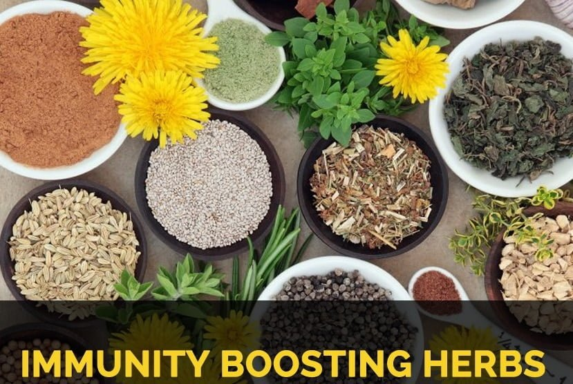 Immune Boosting Herbs for Coronavirus