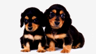 best pets websites in india